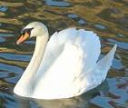 Peuple Algonquin Whitebird